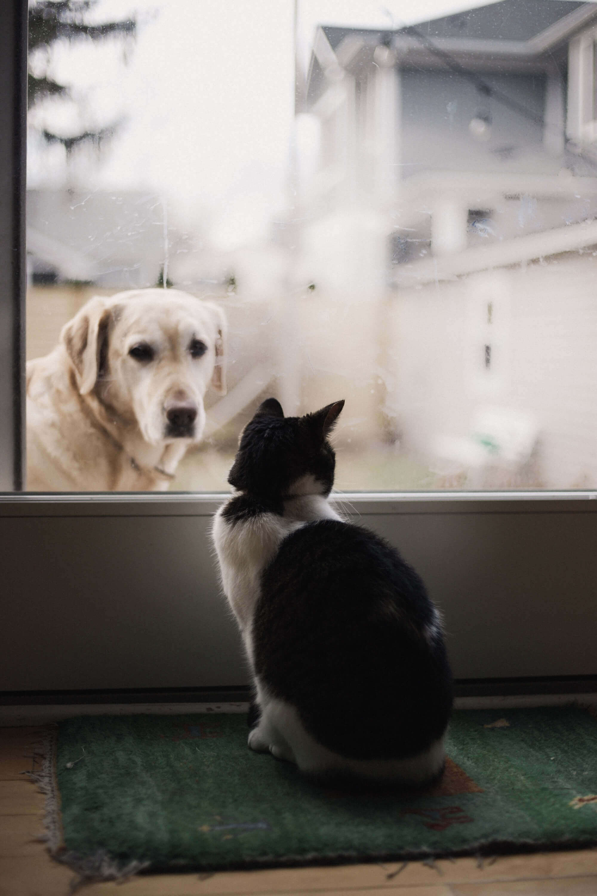 A dog and a cat starring at each other.
